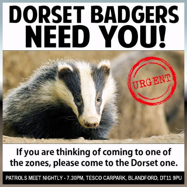 dorset badgers need you