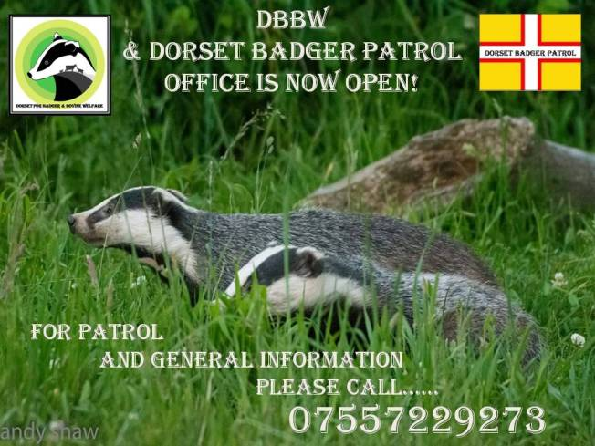 dorset badger patrols 2016