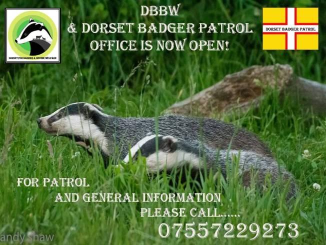 dorset badger patrols 2016